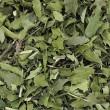Chá de Espinheira Santa Comum (Granel - Preço 100 Gr)